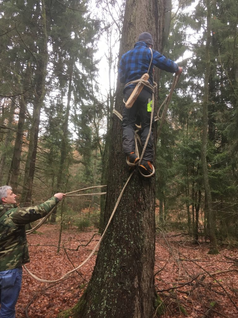 Traditionelle Klettertechnik der Zeidler
